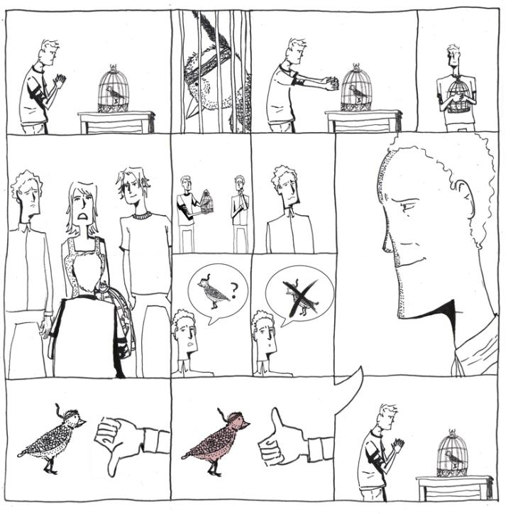 Pássaro - Página 3